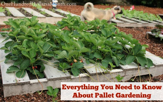Everything You Need to Know About Pallet Gardening