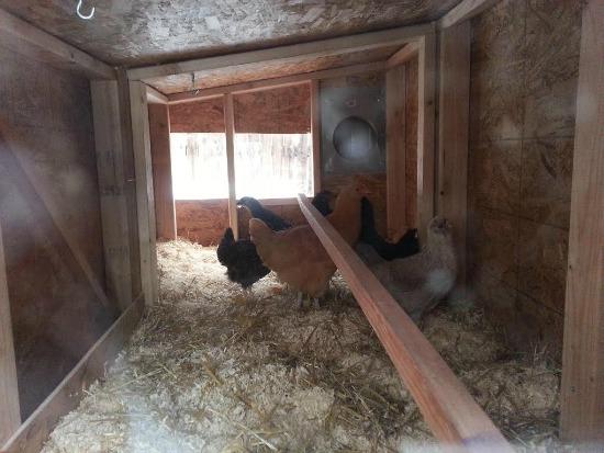 chicken coop3
