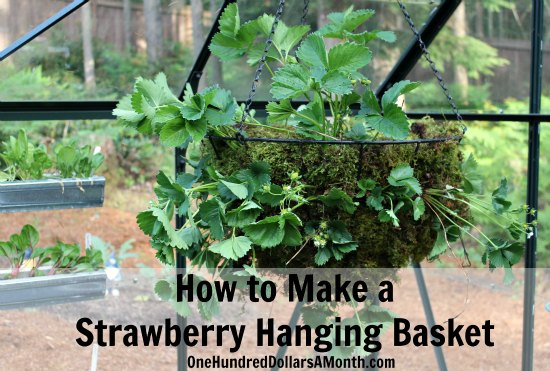 How-to-Make-a-Strawberry-Hanging-Basket2