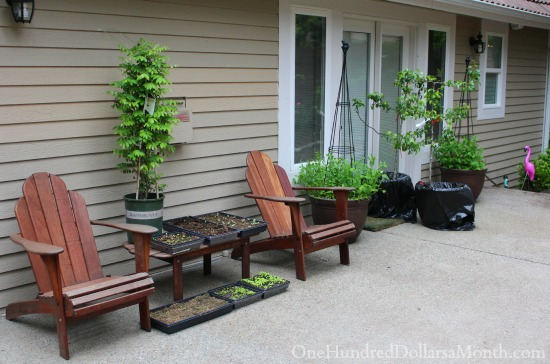 growing vegetables on the patio