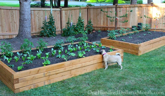 Diy Above Ground Garden Box