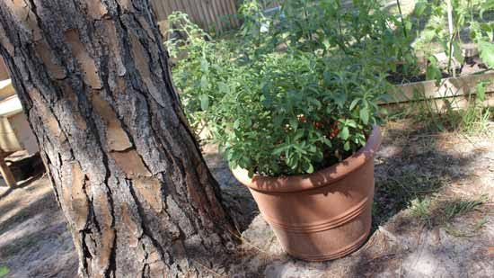 Caroline garden pics6