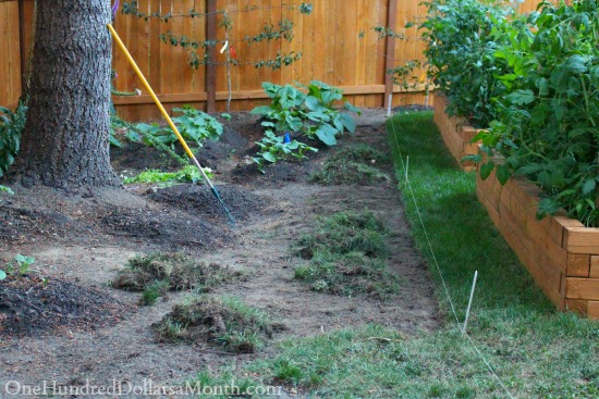 edging grass border in garden