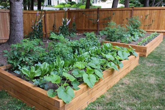 Tips On Basic Garden Design One Hundred Dollars A Month - Basic garden design pictures