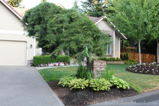 ugly tree in frontyard