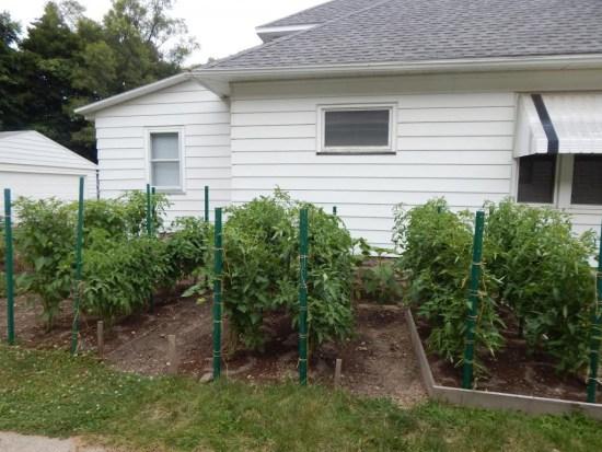 Tammy garden pictures2