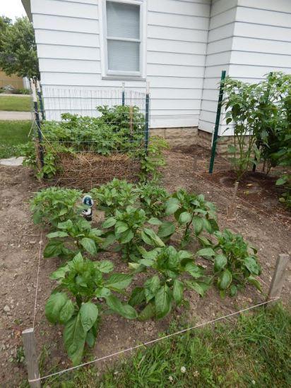 Tammy garden pictures4