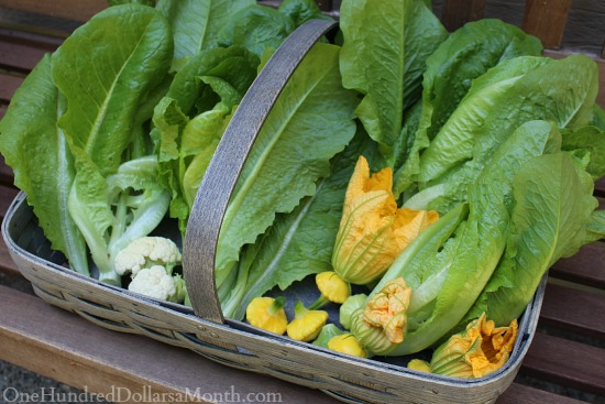 garden basket with organic vegetables