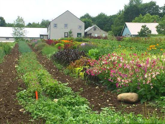 johnnys seeds farm
