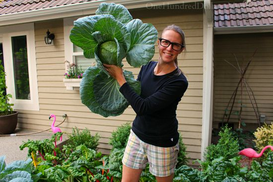 cabbage mavis butterfield