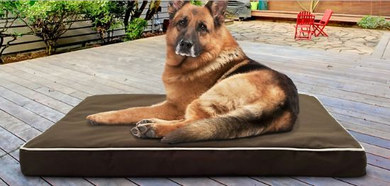 orthopedic pet beds