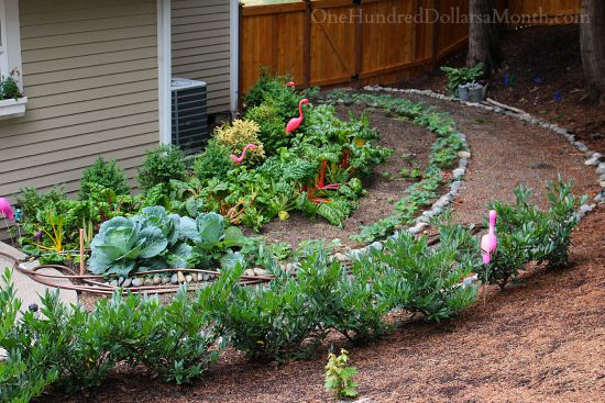 side vegetable garden