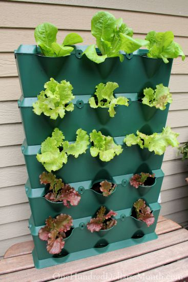 mini garden vertical garden planter