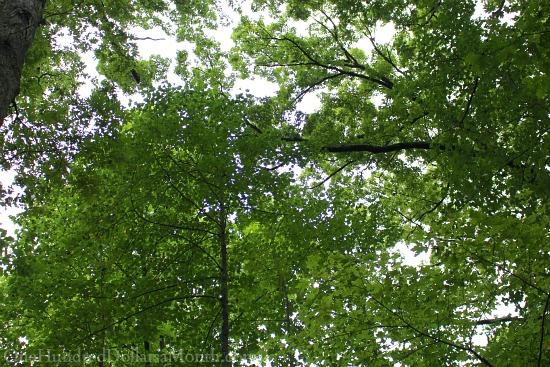sky tree leaves