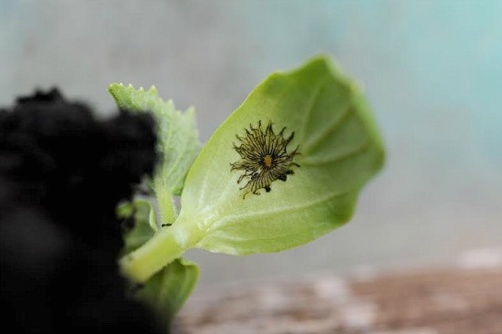 leaf idenification