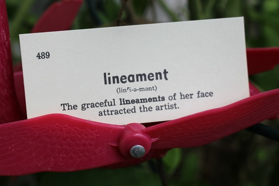 lineament