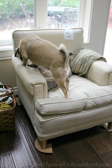 goodwill chair