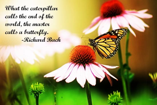 quotes - what the caterpillar calls the end