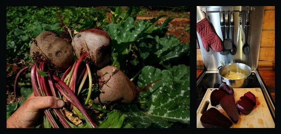 beet root relish