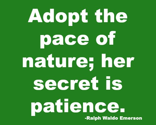 quotes - adopt the pace of nature