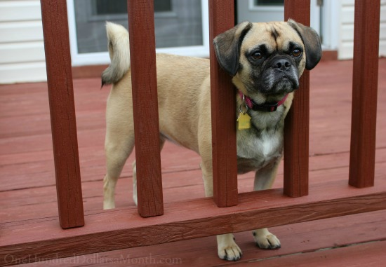 Lucy deck porch
