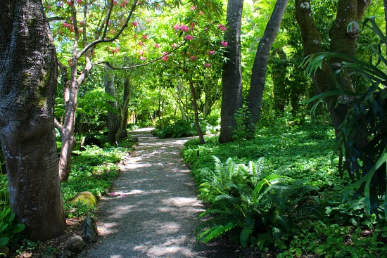 wooded garden path