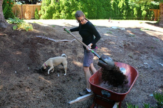 shoveling-dirt-soil