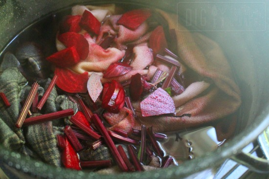 dying wool with beets
