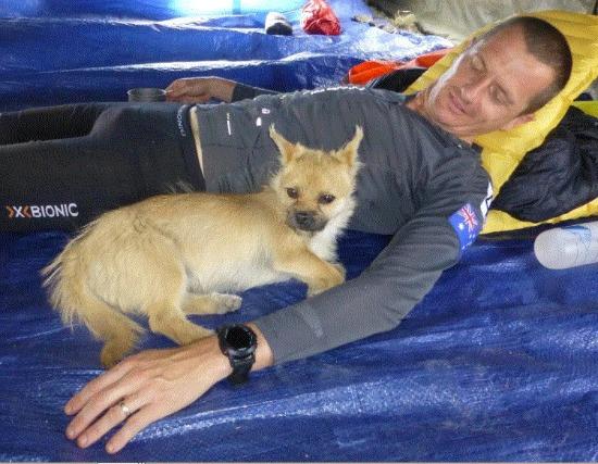 gobi race dog