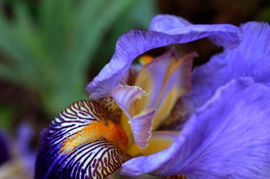 spring-flowers4