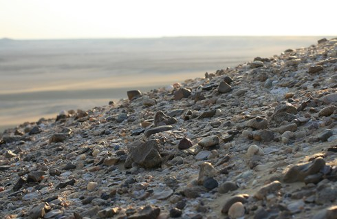 Fossils, fragments, shells, and rocks create areas of texture