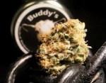 Buddy's Cannabis