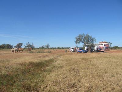 Roadside camp with some brumbies WA
