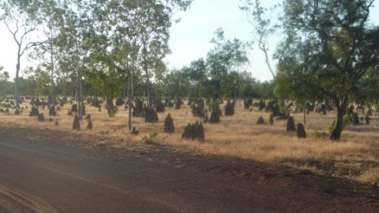 The ever changing style of Termite mounds kept me amused across northen Australia.