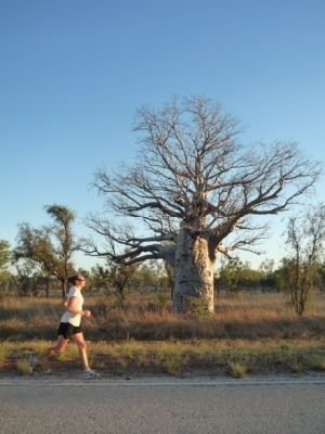 Lovely Boab trees providing a change in the scrubby scenery.