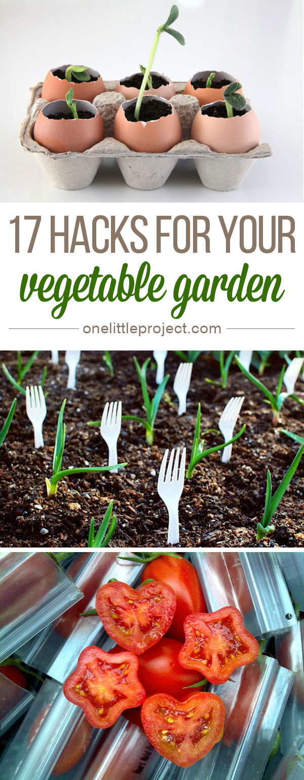 17 Vegetable Garden Hacks - These are so clever!