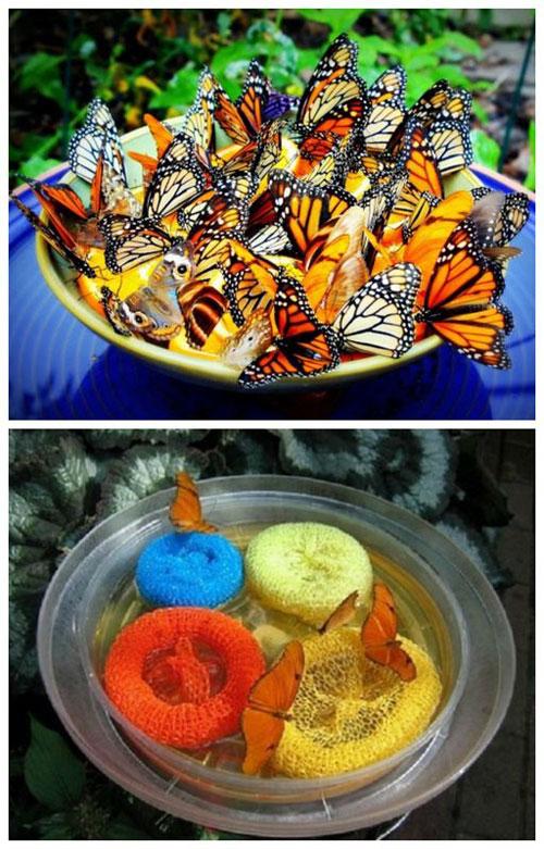 20 Best DIY Garden Crafts - Butterfly Feeder