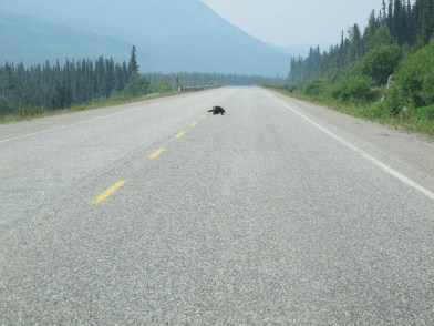 Why did the porcupine cross the road?