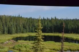 Beaver Lodge and pond