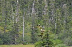 Eagles along the shore.