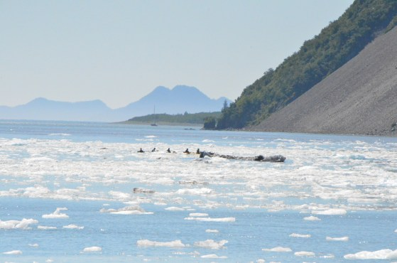 Kayakers watching the Glacier for a safe distance