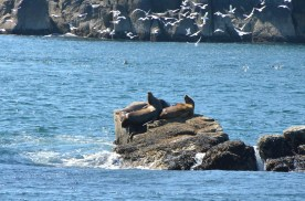 As I was taking photos of these sea lions...