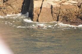 A couple of sea otters