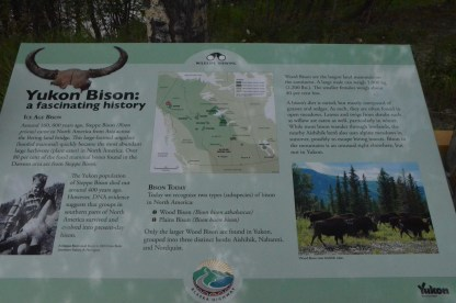 About the bison in the area