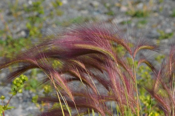 This grass was very pretty