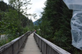 Fish Creek Bear viewing area has this walkway to keep bears and people separate on the way from the parking lot to the overlook.