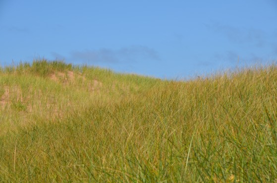 Grass on the tops of the dunes