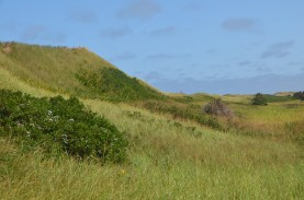 Backside of the dunes.
