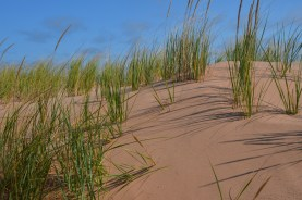 Red Sand has been shifting and burying grass.