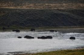 Crossing the Yellowstone